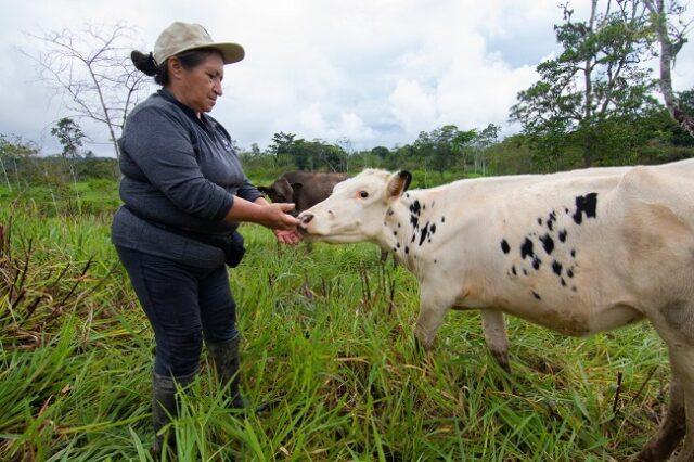 permitirá plantar más de 83.000 árboles bajo sistemas de producción silvopastoril en esta provincia amazónica